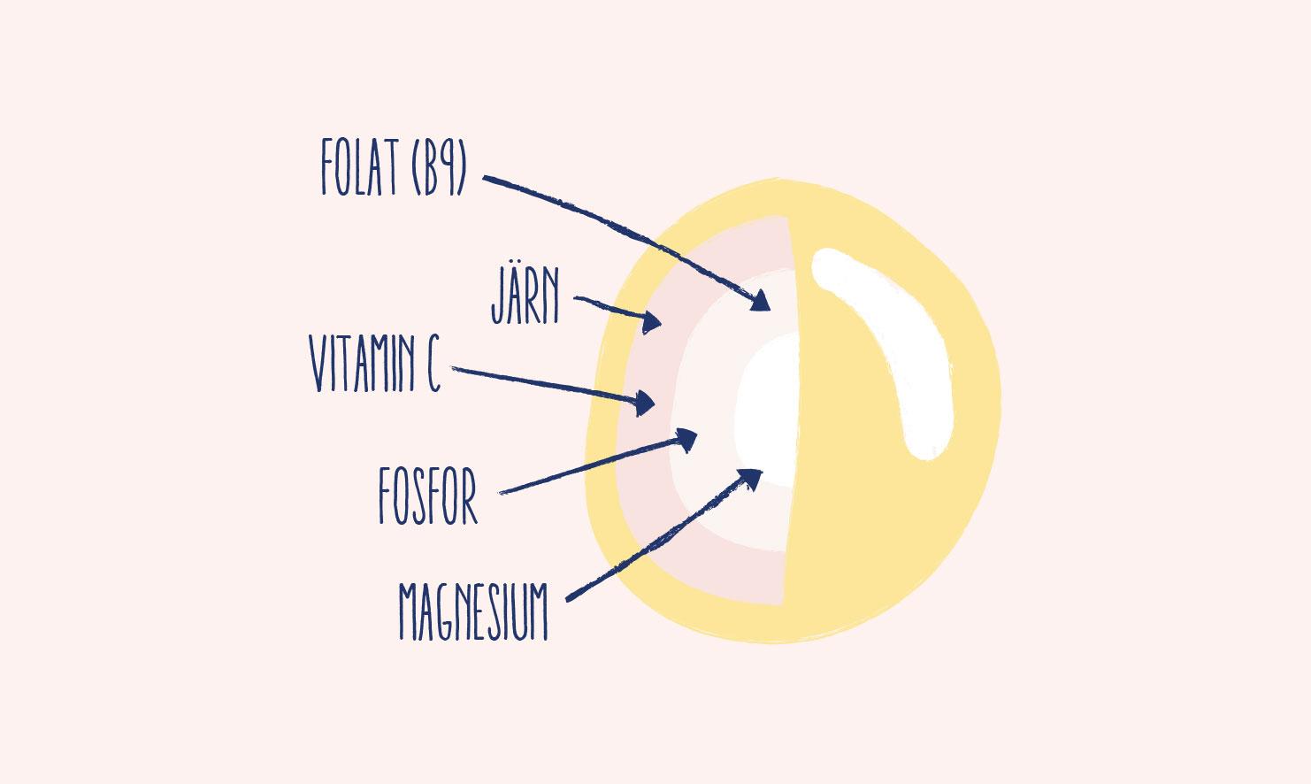 Lupinens näringsämnen: folat (B9), järn, vitamin c, fosfor, magnesium.